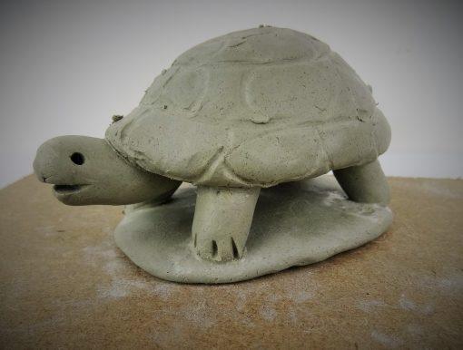 TP tortoise.